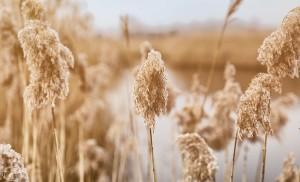 MA_Grass